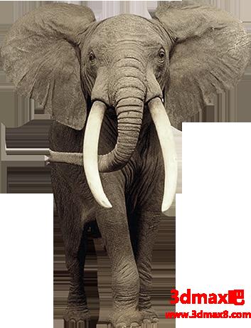 合成风化年迈大象图片效果的PS教程